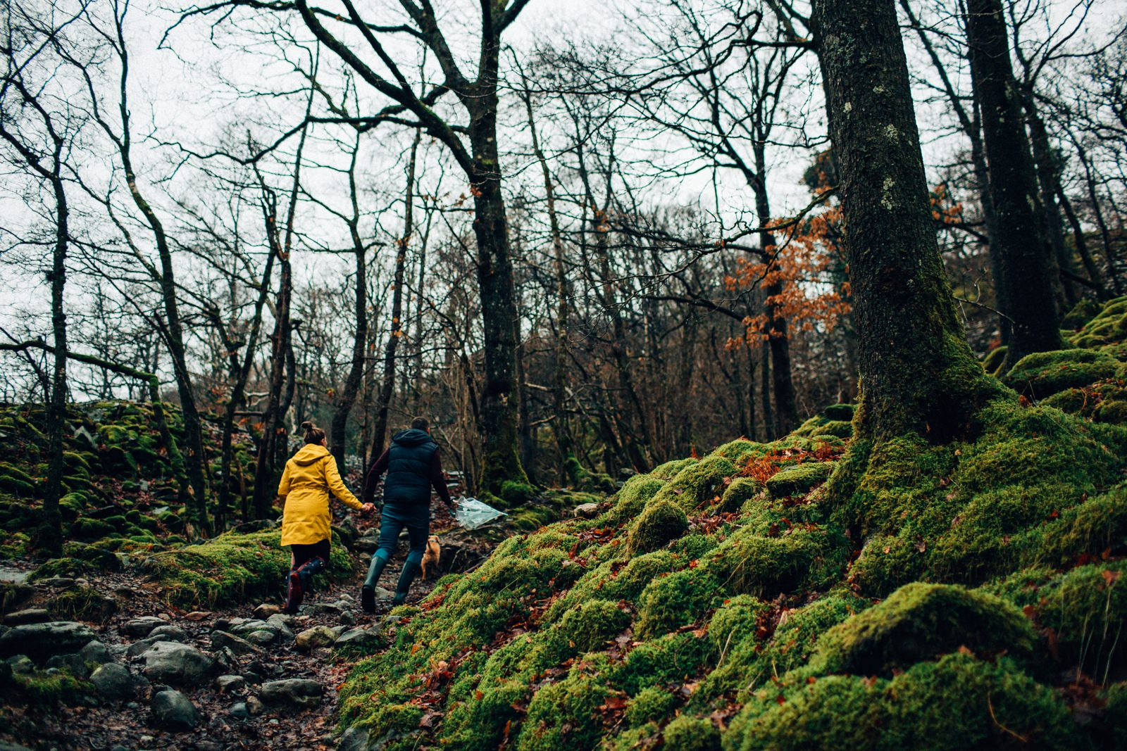 hiking through the woods covered with green moss with the couple
