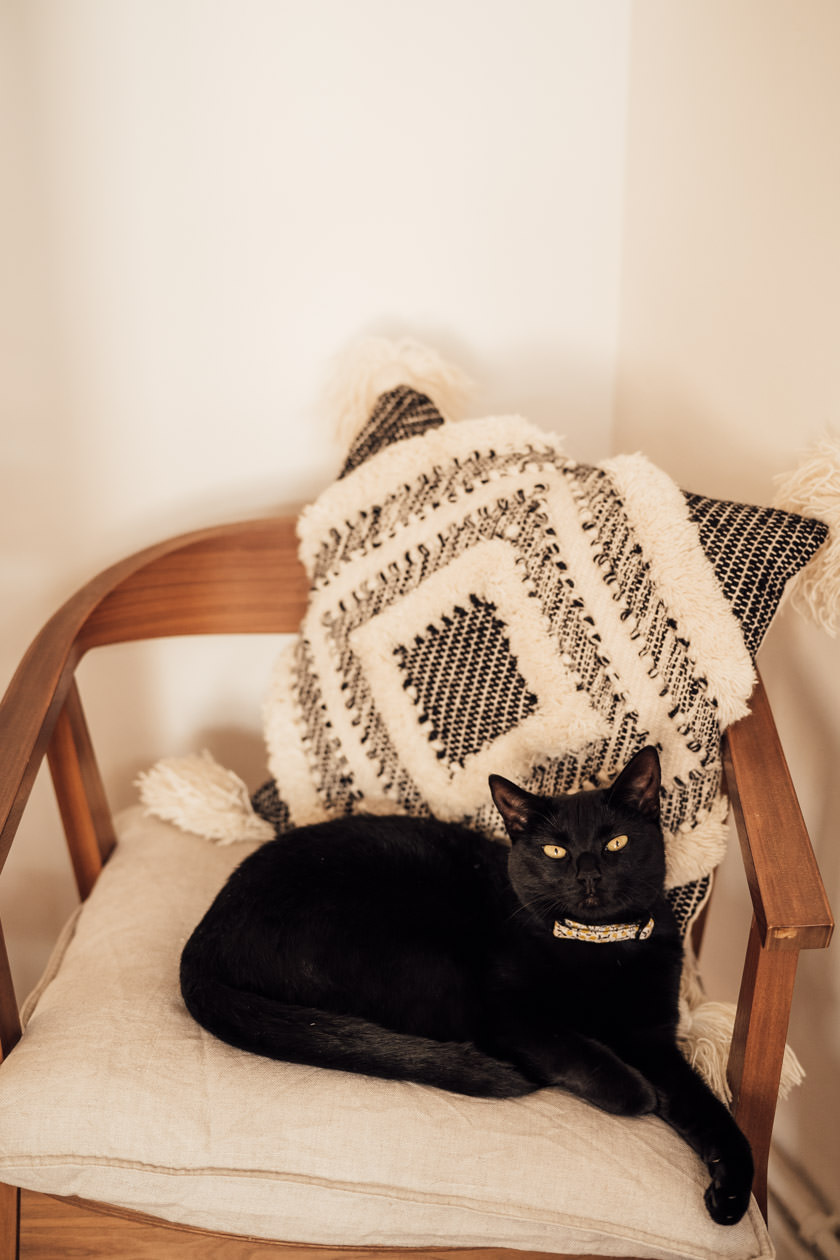 black cat sitting on a pillow