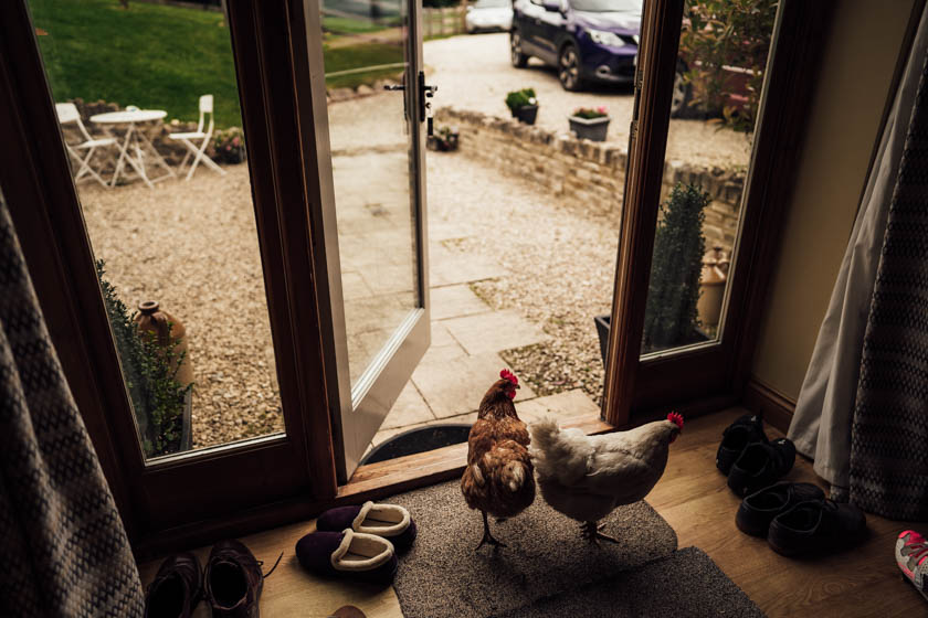 chickens inside of a cottage